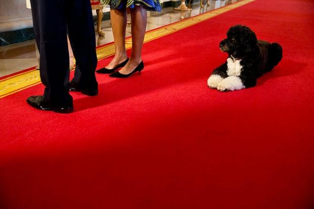 Bo espera que el Presidente y la Primera Dama participan en una entrevista con Barbara Walters en el Salón de la Cruz de la Casa Blanca. Créditos: Pete Souza