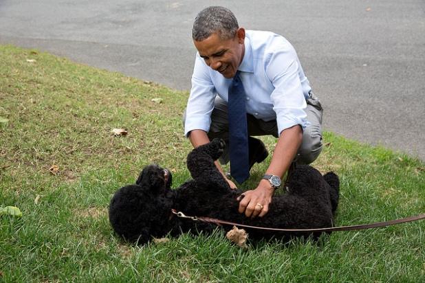 El Presidente juega con Sunny, la nueva mascota de la familia Obama, en el Jardín Sur en su primer día en la Casa Blanca. Créditos: Pete Souza